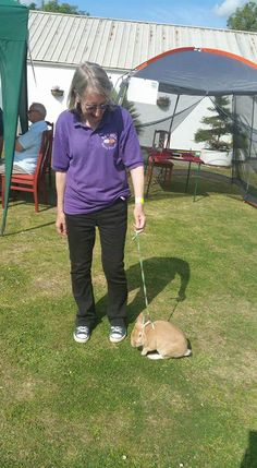 Its Furry Friends in Bexhill, a not for profit animal therapy organisation where volunteers take harnessed rabbits to visit elderly, disabled, children, community groups & attend events. Volunteer Week, Volunteers, Rabbits, Therapy, Community, Events, Animal, Friends, Children