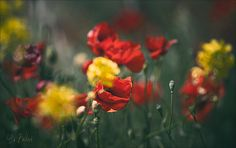 Ариадна Белкина - фотографии. 35фото Rubrics, Professional Photographer, Poppies, Nature, Plants, Random, Beauty Queens, Flowers, Naturaleza
