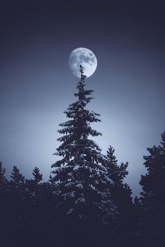 Here are some amazing Full Moon Photography Tips and Ideas that will come handy if you are keen on taking creative moon pictures. Moon Moon, Moon Art, The Moon, Moon Photography, Digital Photography, Photography Tips, Moon Magic, Moon Lovers, Stars And Moon