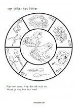 knipblad Kikkers - Puzzel van dril tot kikker