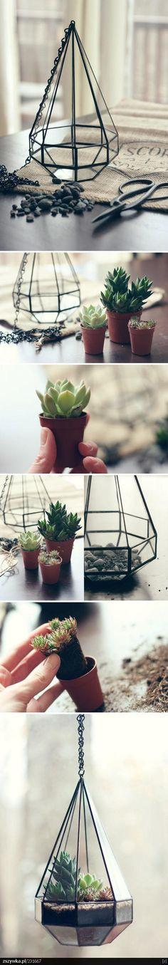 how to make a succulent diamond terrarium