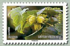 Noisettes France