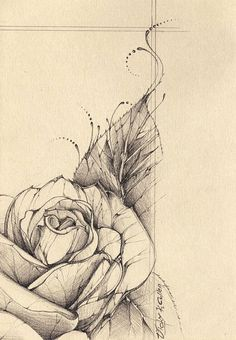 Quasi-Cabbage Rose by amfipolos ~ so much to love in this drawing