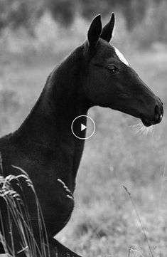 Cute Horses, Beautiful Horses, Horse Senior Pictures, Types Of Sound, Learn Faster, Horse Photography, Wild Horses, Show Horses, Pony