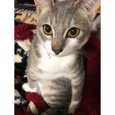 イケメン🤔✨どや #ねこ #愛猫 #cat #nekostagram #ほんじつのしゅうまる