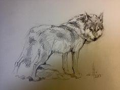 Dibujo lobo a grafito por Francisco Javier Abellán