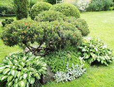 Растения Подмосковья