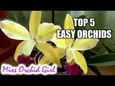 Top 10 DON'Ts when Growing Orchids - tips for orchid beginners - YouTube