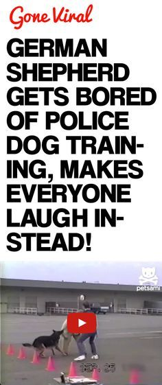 #Youtube #funnyvideos #humor brought to you by http://williamotoole.com/RobHollis1German Shepherd Gets Bored of Police Dog Training, Makes Everyone Laugh Instead!