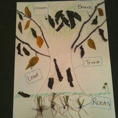 Parts of a tree, using real tree parts :) I made it for my kinder science lesson plan