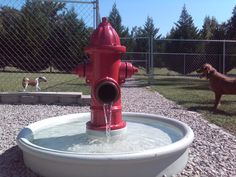 Dog E Dog World: The new fire hydrant water fountain...