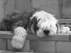 My dog Apollon, he leaved us in 2006, he was 15 years old...