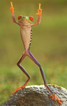 Hiphop frog[good]