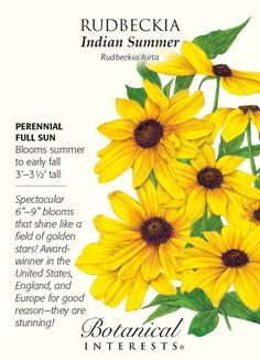 Indian Summer Rudbeckia Seeds - 50 mg House Plants For Sale, Plants For Sale Online, Beautiful Gardens, Beautiful Flowers, House Plant Delivery, Organic Weed Control, Full Sun Perennials, Flower Meanings, Garden Journal