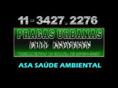 Insetos Dedetização 11 3427 2276 ASA Grupo SP a