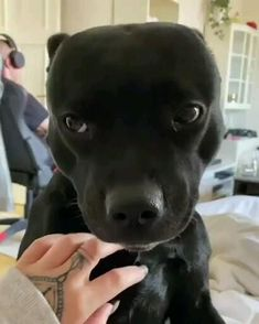 Cute Little Animals, Cute Funny Animals, Funny Dogs, Funny Animal Videos, Animal Memes, Cute Dogs And Puppies, Black Pitbull Puppies, Doggies, Cute Creatures