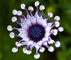 such a cool looking flower!