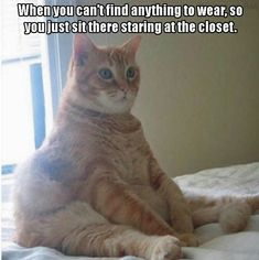 when you don't find anything to wear... then you ll be like this funny cat. lol ... hahhaha