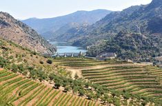 Portugal's beautiful Douro region has lots to offer. Check out our top ideas of what to do and see in this sunny region.