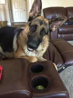 """Hope your doing well! From your friends at Scottsdale dog training""""k9katelynn""""! Please see More about phoenix dog training at k9katelynn.com! Pinterest with over 21,200 followers! Google plus with over 280,000 views! LinkedIn with over 10,000  associates!! Now on instant-gram ! K9katelynn proudly serving the valley for 12 years!"""