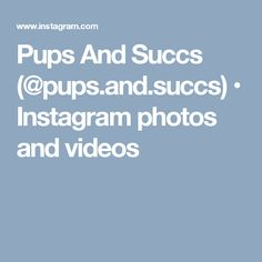 Pups And Succs (@pups.and.succs) • Instagram photos and videos
