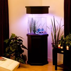Image gallery octagon aquarium set up for Octagon fish tank with stand