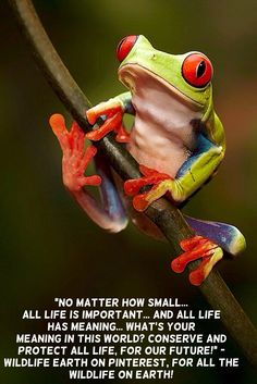 """No matter how small... all life is important... and all life has meaning... what's your meaning in this world? Conserve and protect all life, for our future!"" - Daniel Powers, Wildlife Earth on Pinterest, for all the Wildlife on Earth!"