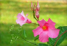 Sommerblüten - Jahreszeiten - Galerie - Community