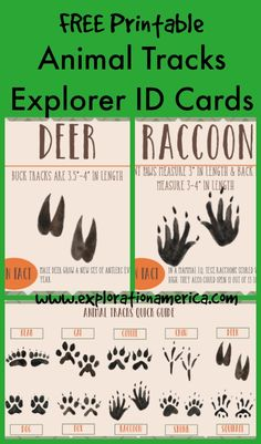 Free Printable Animal Tracks Explorer ID Cards - a fun way for kids to get outdoors and identify animals by their tracks. LOVE the simple earthy design. Great for science centers, Montessori, preschool, scavenger hunts and nature hikes. Just print, lamina Preschool Science, Science For Kids, Science And Nature, Montessori Preschool, Earth Science, Nature For Kids, Summer Science, Science Fun, Physical Science