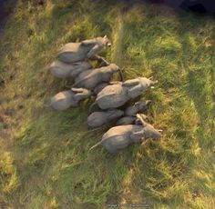 Google's satellites sometimes catch the Earth's inhabitants on the move, like these ten African elephants (Google Earth coordinates 10.903497,19.93229).