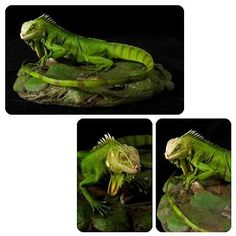 From Cold-Blooded Collectibles, comes this really cool Green Iguana Statue. For those who just can't find the time to take care of a pet, this lizard sculpture is for you! This Iguana statue is made of polystone resin.