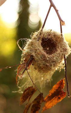 How Unique!! a u t u m n #Nest, #Suspend, #Nature