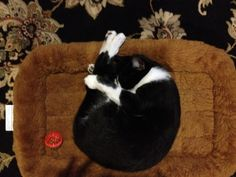 I'll Just Sleep Here Like This