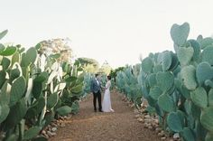Real Wedding / A South African Farm Wedding on The LANE / Photo Love Made Visible