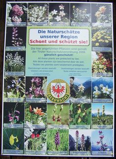 Naturpark Lechtal. Bergblumen
