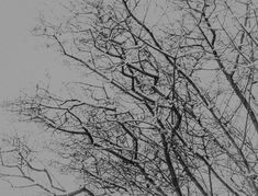 Black and White White Trees, Black And White Tree, Canadian Nature, Calgary, Landscape, Abstract, Artwork, Silver, Image