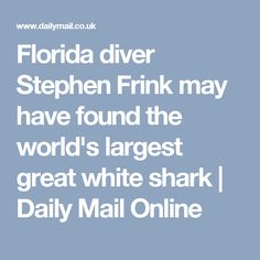 Florida diver Stephen Frink may have found the world's largest great whiteshark | Daily Mail Online