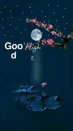 Good Night Massage, Good Night Sleep Tight, Cute Good Night, Good Night Sweet Dreams, Good Night Greetings, Good Night Wishes, Good Night Quotes, Good Morning Beautiful Pictures, Beautiful Scenery Pictures
