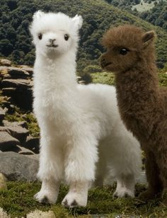 12 Deadly Cute Animals – Gülten Great Funny Animals Pictures – eftelya orhanToday I want to say good morning to these dear alpacas; one of the most beautiful and Animals That Are Totally Ready for Sweater Weather – Dea BelliPHOTOS: 40 Cute Animals – g Baby Animals Pictures, Cute Animal Pictures, Animals And Pets, Cute Animals Images, Adorable Pictures, Small Animals, Jungle Animals, Animal Pics, Wild Animals