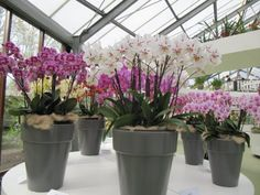 Orchids, Gardening, Plants, Lawn And Garden, Lily, Plant, Orchid, Planting, Planets