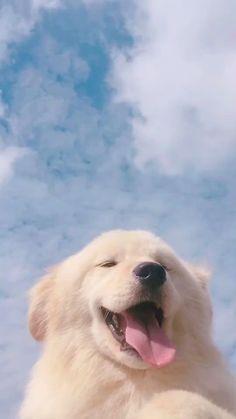 Dog Breeds Little .Dog Breeds Little Super Cute Puppies, Cute Baby Dogs, Cute Little Puppies, Cute Dogs And Puppies, Cute Little Animals, Cute Funny Animals, Cute Cats, Baby Cats, Cute Puppy Wallpaper