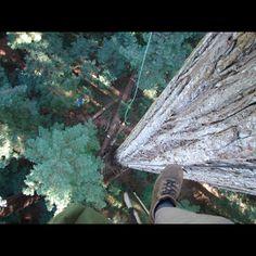 Tree work gear - Sherrill Tree