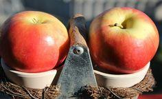 Sete dicas para uma alimentação mais saudável e sustentável