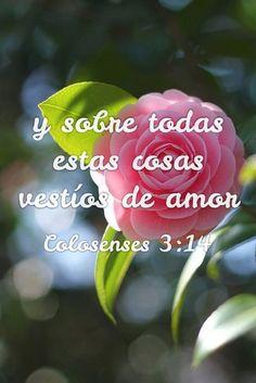 Colosenses 3:14 Y sobre todas estas cosas vestíos de amor, que es el vínculo perfecto.♔
