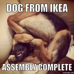 Picture # 39 collection funny dogs picture pics) for December 2015 – Funny Pictures, Quotes, Pics, Photos, Images and Very Cute animals. Cute Funny Animals, Funny Animal Pictures, Dog Pictures, Funny Cute, Funny Dogs, Hilarious, Funny Memes, Animal Pics, Weird Dogs
