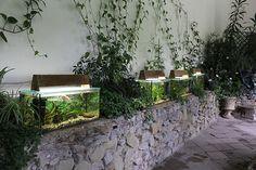 Mud, Plants, Flora, Plant, Planting