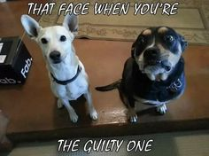 The guilty one...