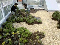 Ecotelhado telhado, telhados, telhado verde, telhado de grama, cobertura vegetal, jardim suspenso, jardins suspensos