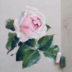 Уже больше двух недель ничего не рисовала. Соскучилась #пастель #роза #цветыпастелью #цветы #softpastel #softpastels #flowers #schmincke