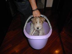 Ginger's 1st bath. 24.08.13